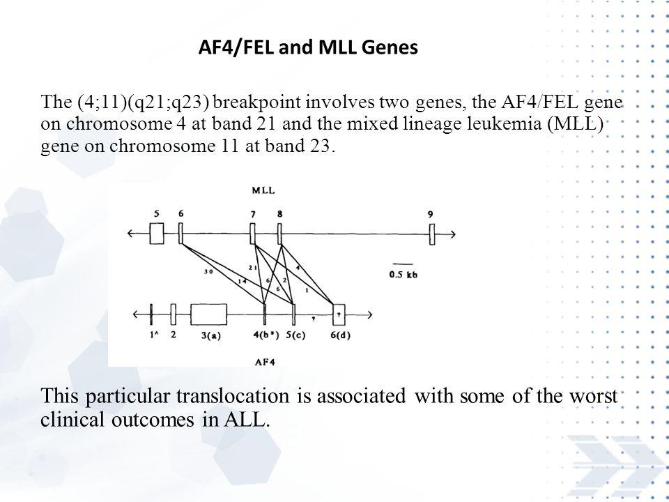AF4/FEL and MLL Genes