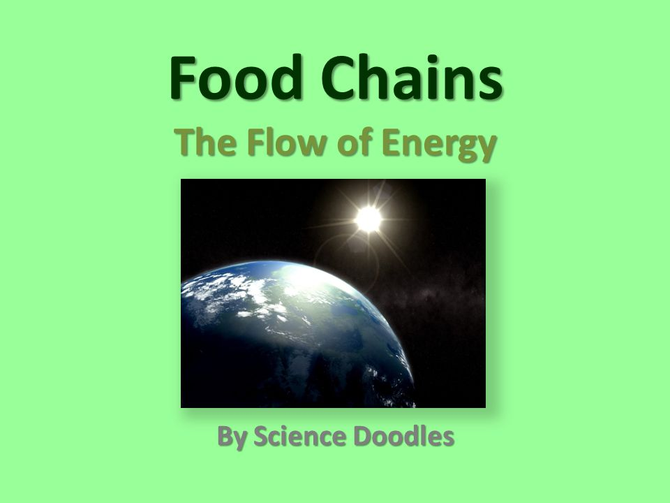 Food Chains The Flow of Energy