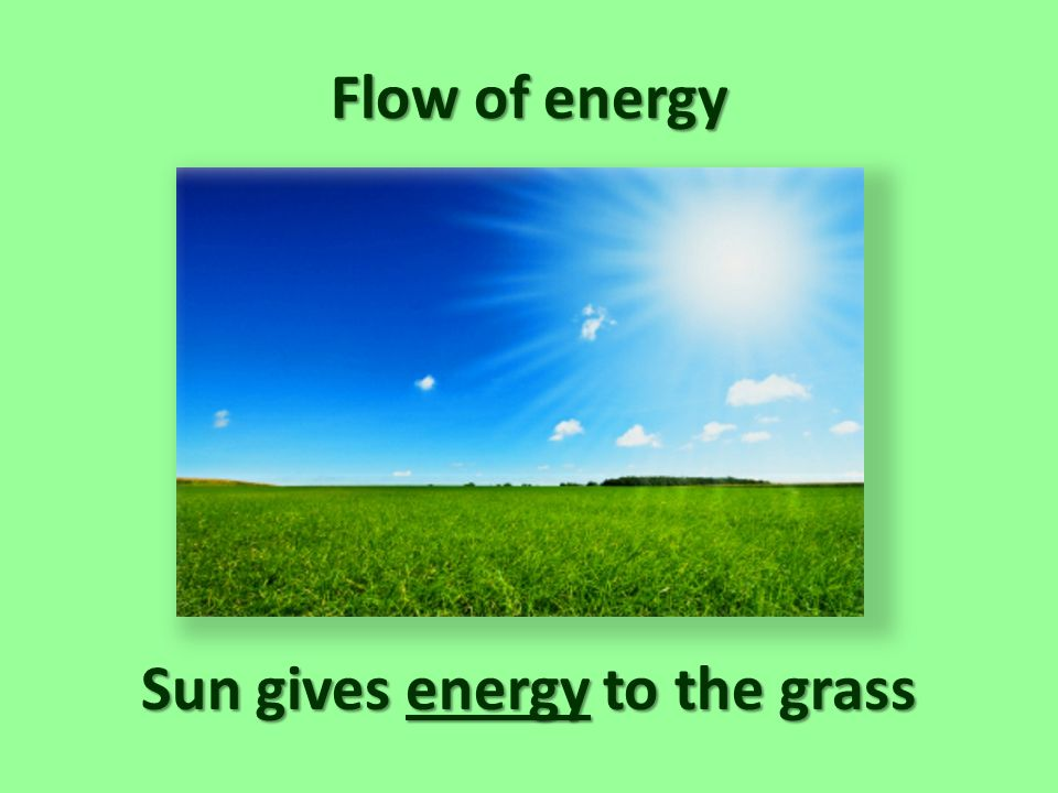 Sun gives energy to the grass