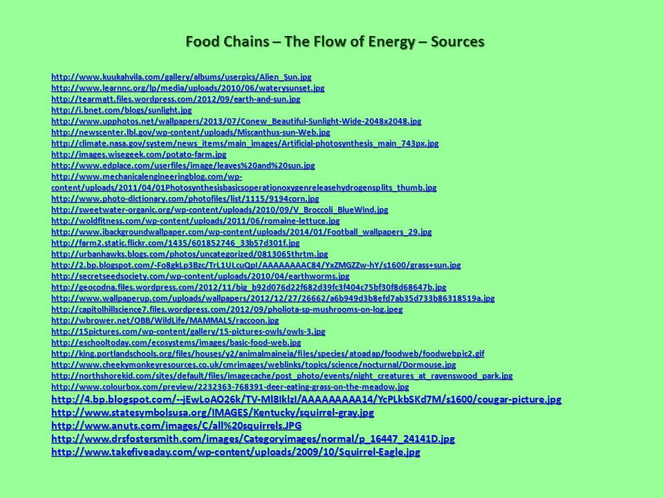 Food Chains – The Flow of Energy – Sources