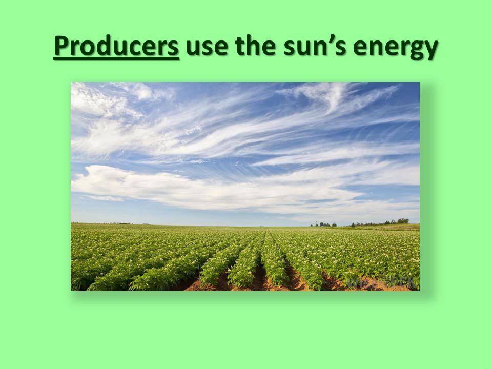 Producers use the sun's energy