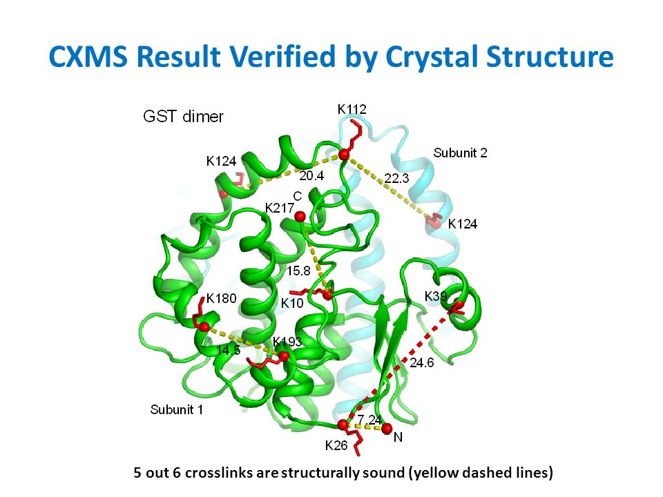 CXMS Result Verified by Crystal Structure