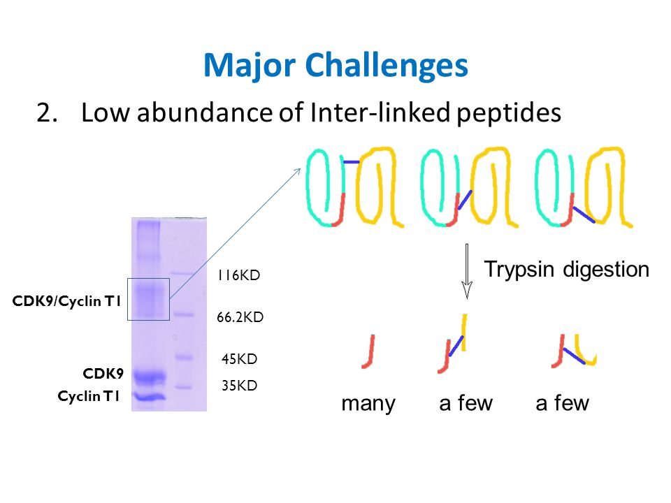 Major Challenges Low abundance of Inter-linked peptides