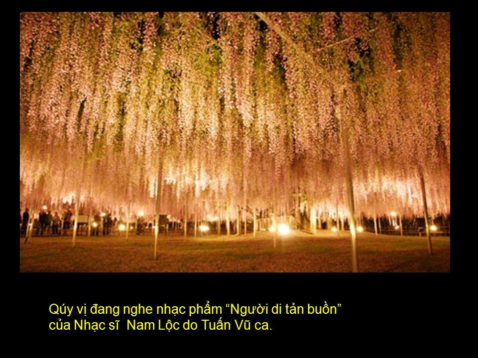 Qúy vị đang nghe nhạc phẩm Người di tản buồn của Nhạc sĩ Nam Lộc do Tuấn Vũ ca.