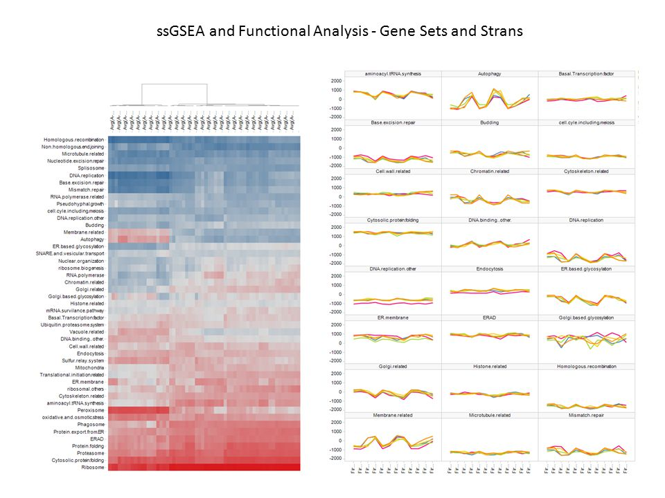 ssGSEA and Functional Analysis - Gene Sets and Strans