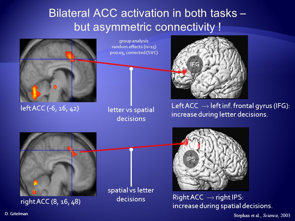 Bilateral ACC activation in both tasks – but asymmetric connectivity !