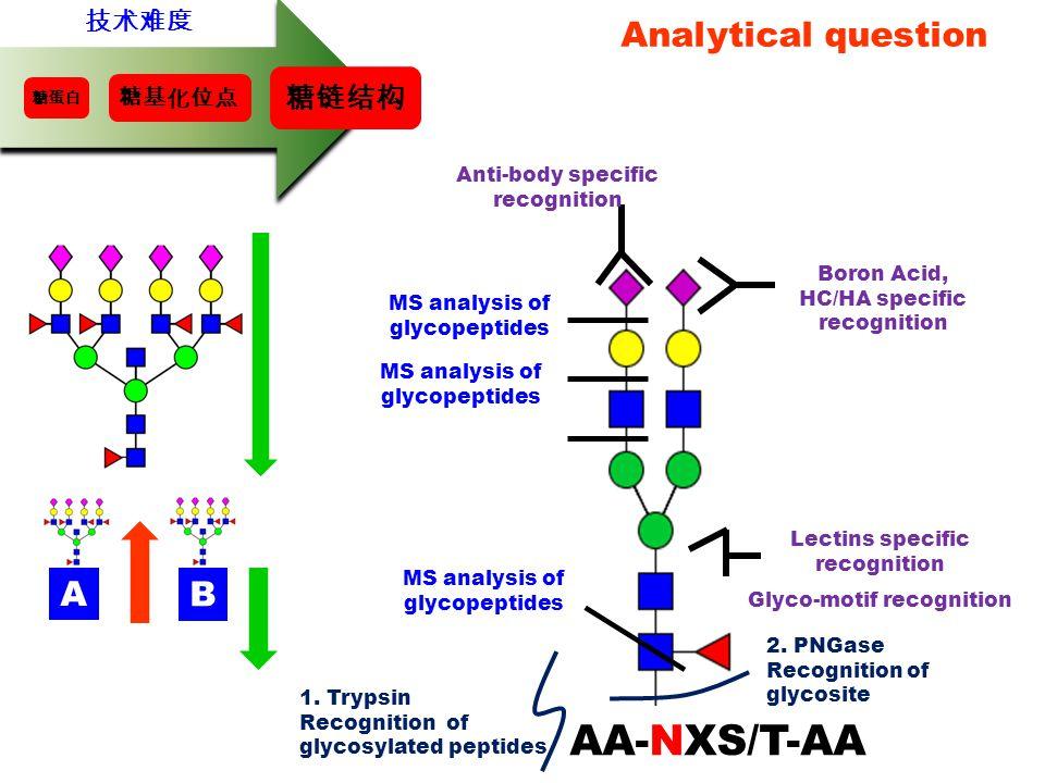 AA-NXS/T-AA Analytical question A B 糖链结构 技术难度 糖基化位点
