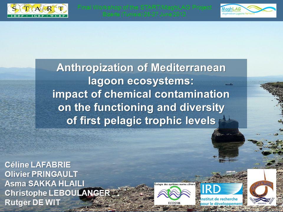 Anthropization of Mediterranean lagoon ecosystems: