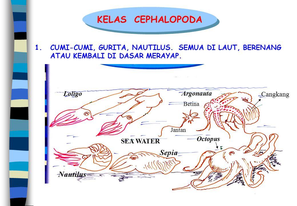 KELAS CEPHALOPODA Sepia Nautilus