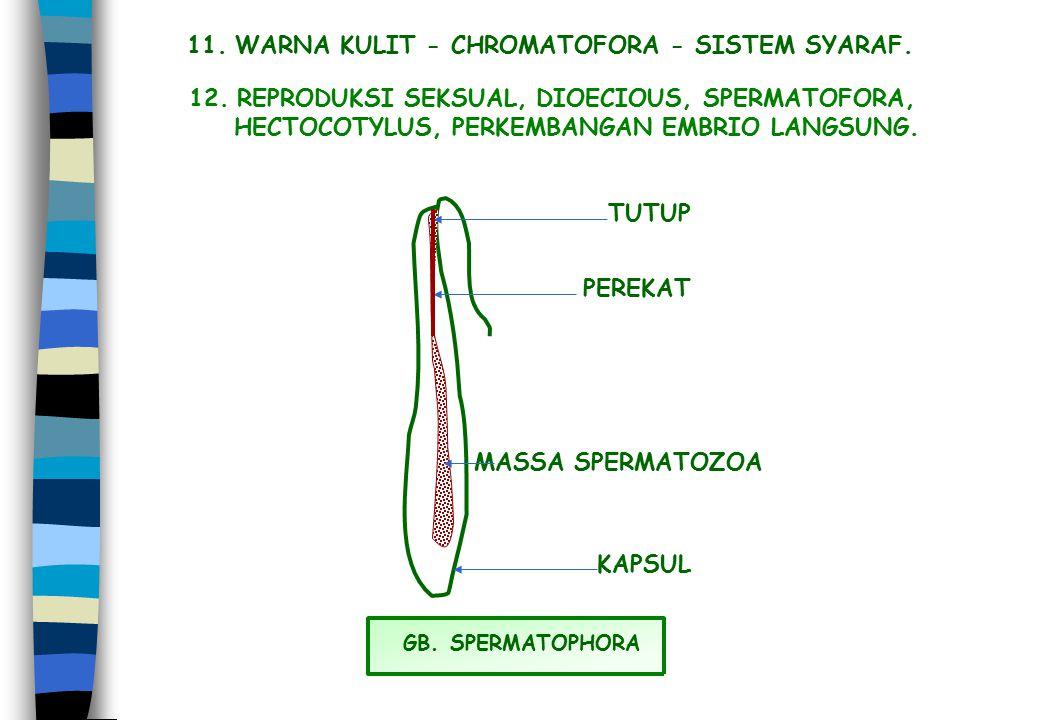11. WARNA KULIT - CHROMATOFORA - SISTEM SYARAF.