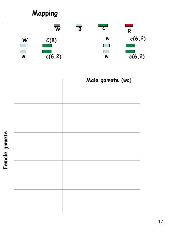 Mapping W B C R w c(6,2) W C(8) w c(6,2) w c(6,2) Male gamete (wc)