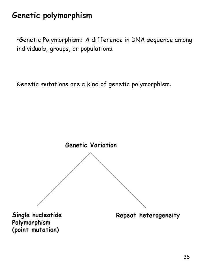 Genetic polymorphism Genetic Polymorphism: A difference in DNA sequence among. individuals, groups, or populations.