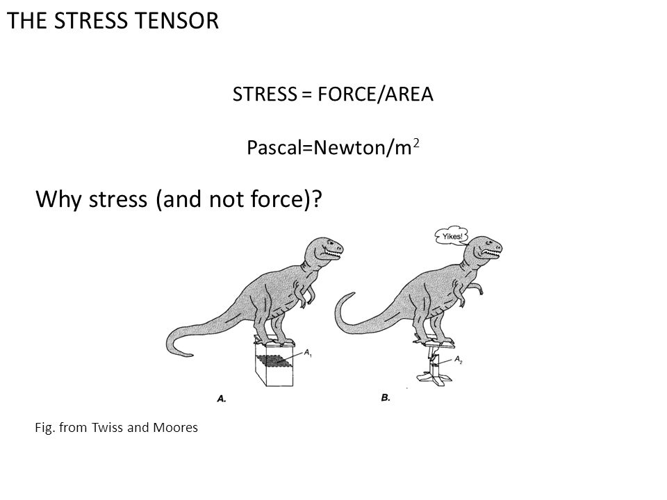 Why stress (and not force)