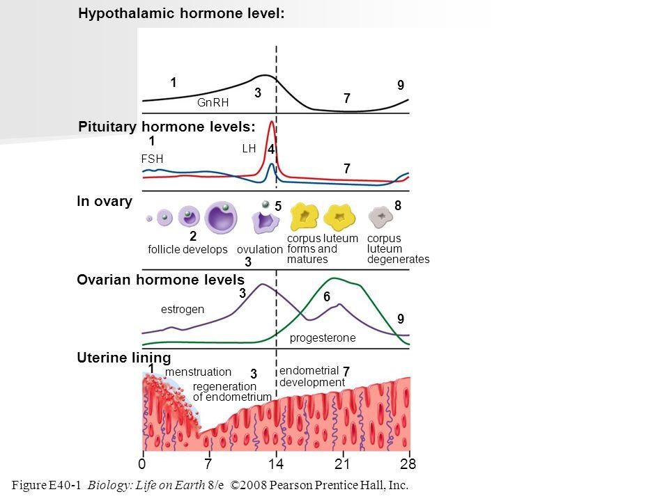 Hypothalamic hormone level: