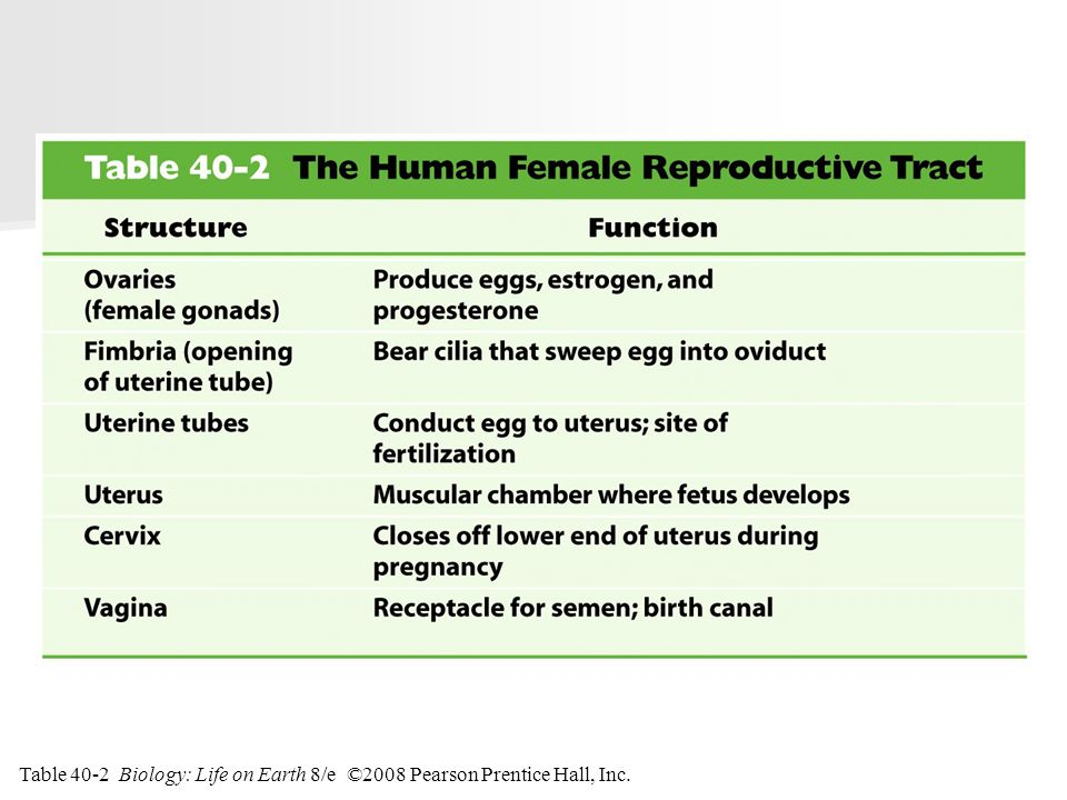 Table 40-2 The Human Female Reproductive Tract