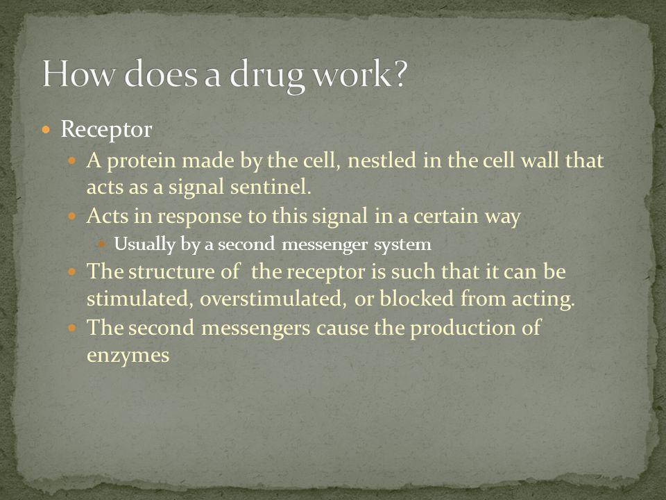 How does a drug work Receptor