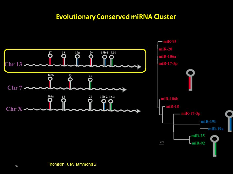 Evolutionary Conserved miRNA Cluster