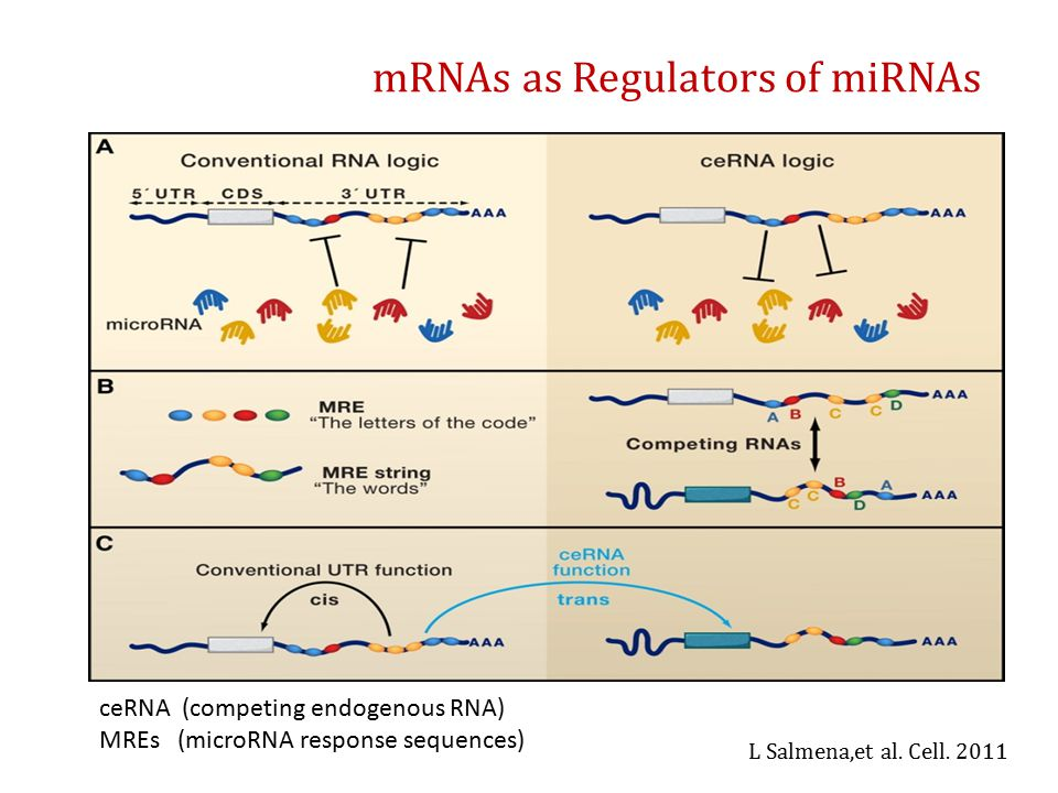 mRNAs as Regulators of miRNAs