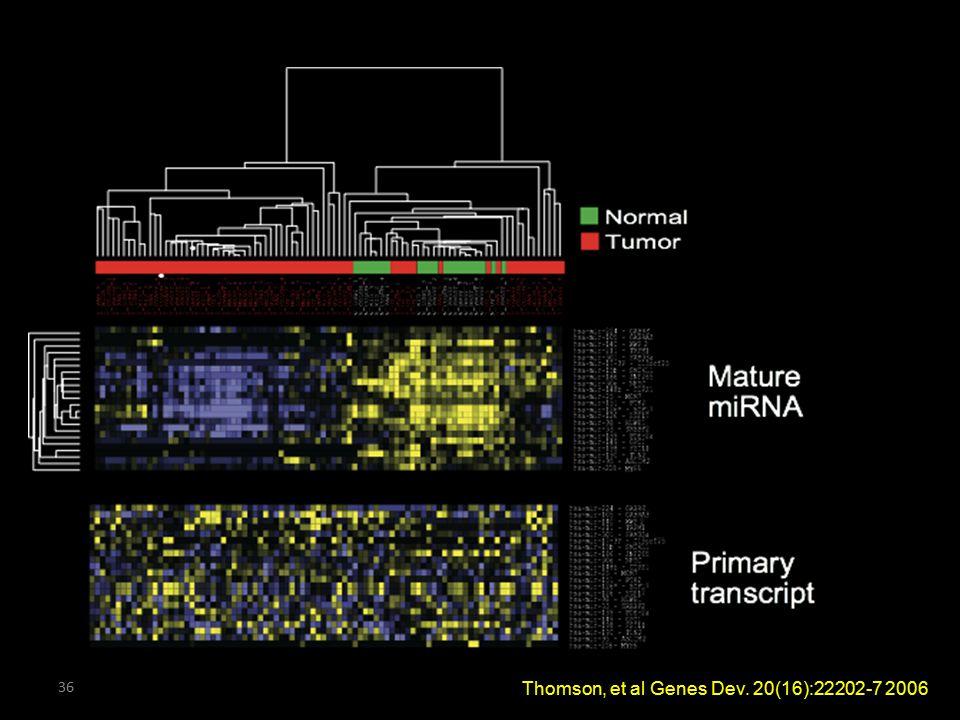Thomson, et al Genes Dev. 20(16):22202-7 2006