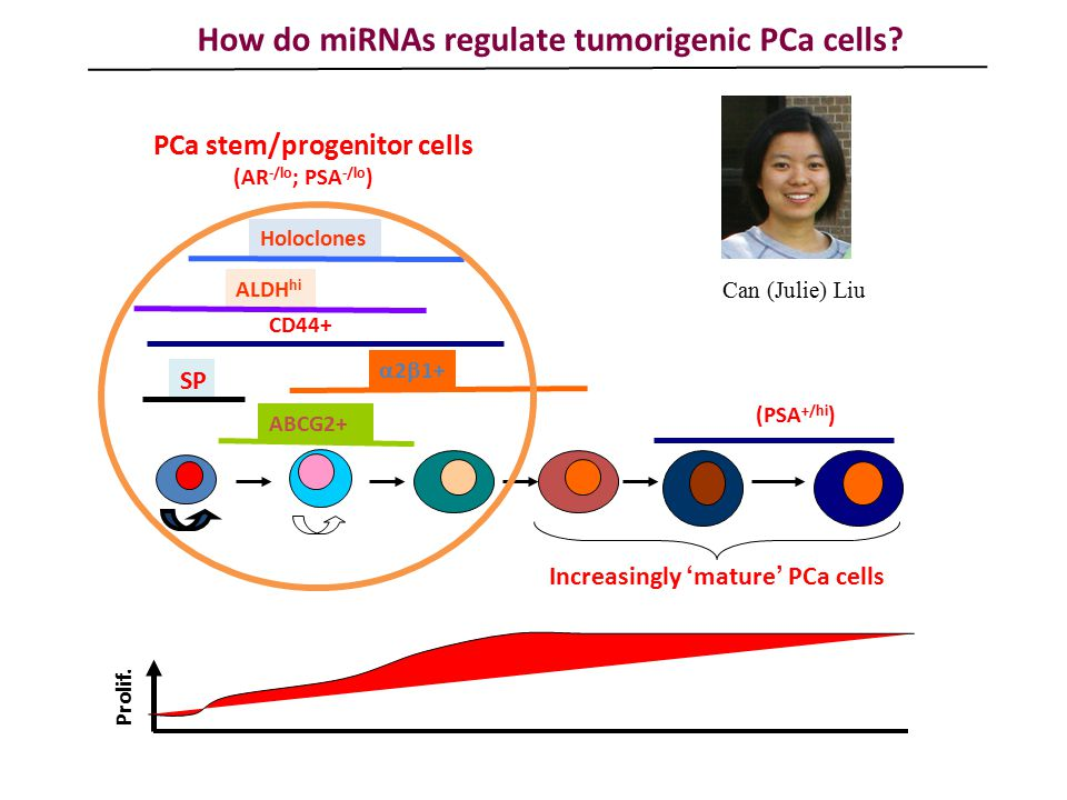 How do miRNAs regulate tumorigenic PCa cells