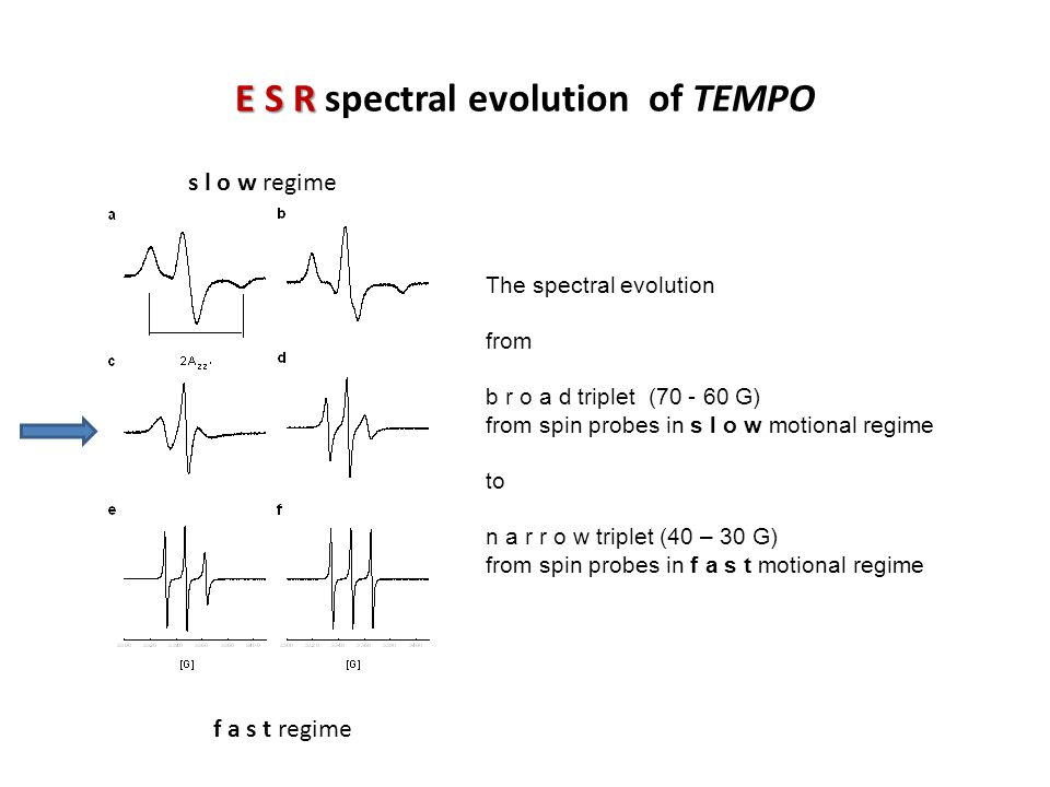 E S R spectral evolution of TEMPO