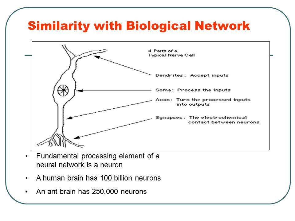 Similarity with Biological Network