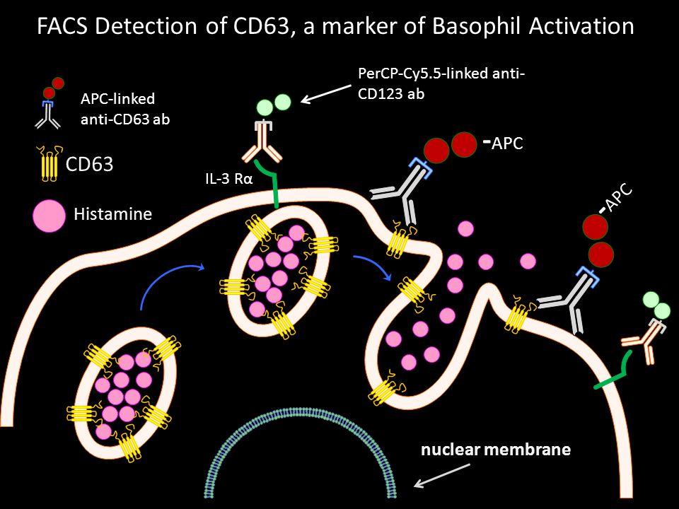 -APC -APC FACS Detection of CD63, a marker of Basophil Activation CD63