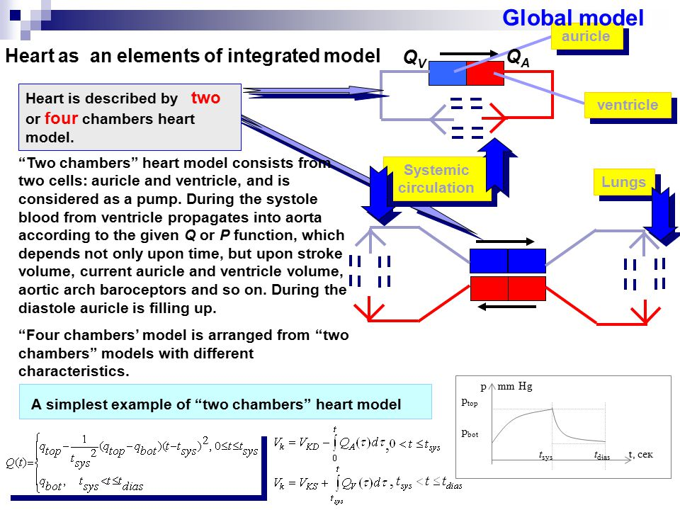 Heart as an elements of integrated model