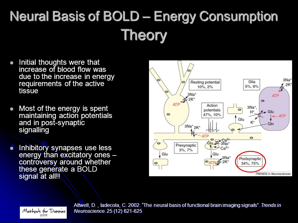 Neural Basis of BOLD – Energy Consumption Theory