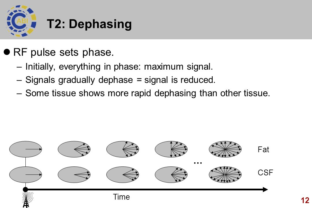 T2: Dephasing RF pulse sets phase.