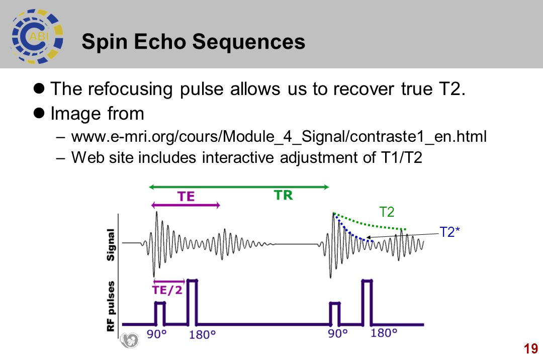 Spin Echo Sequences The refocusing pulse allows us to recover true T2.