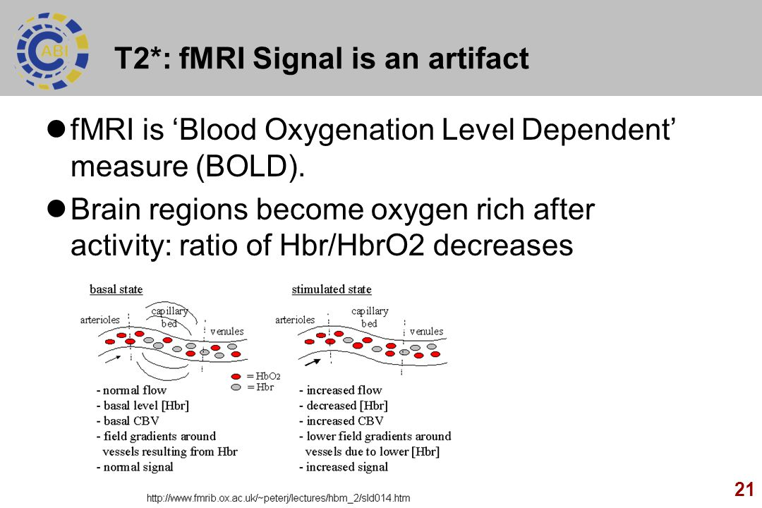 T2*: fMRI Signal is an artifact