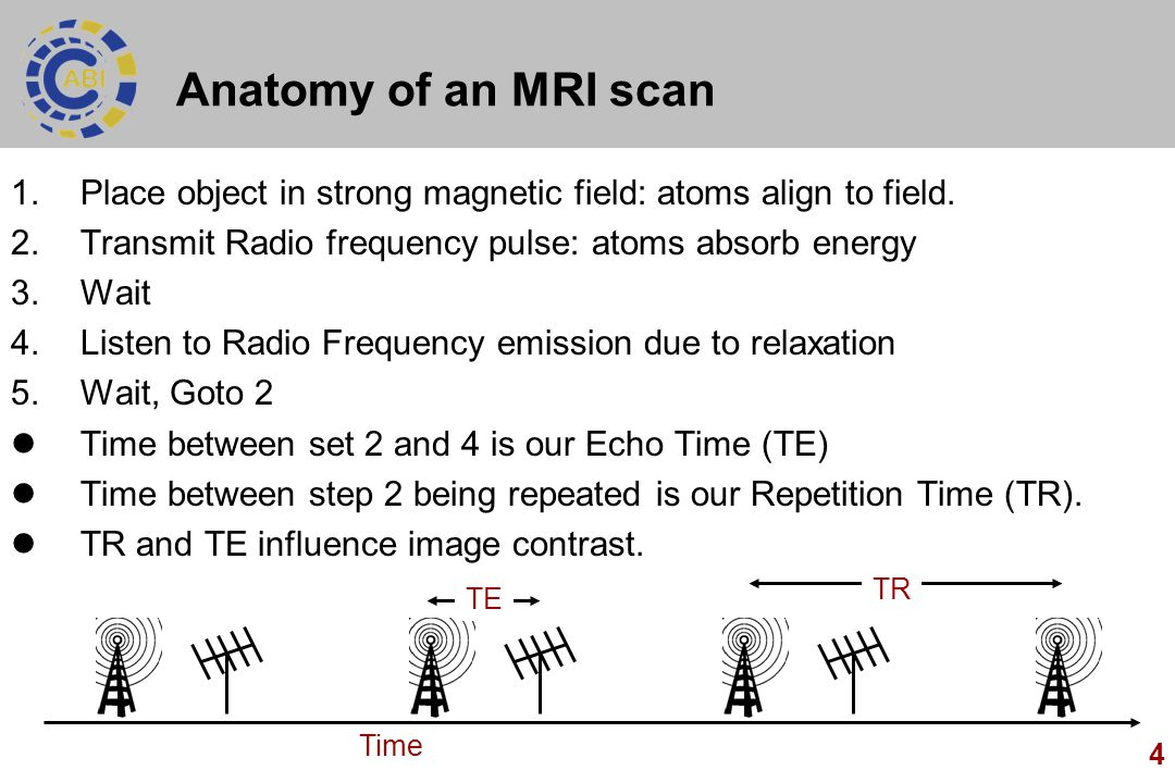 Anatomy of an MRI scan Place object in strong magnetic field: atoms align to field. Transmit Radio frequency pulse: atoms absorb energy.