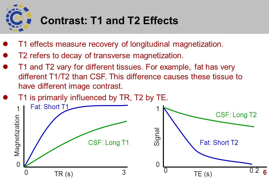 Contrast: T1 and T2 Effects