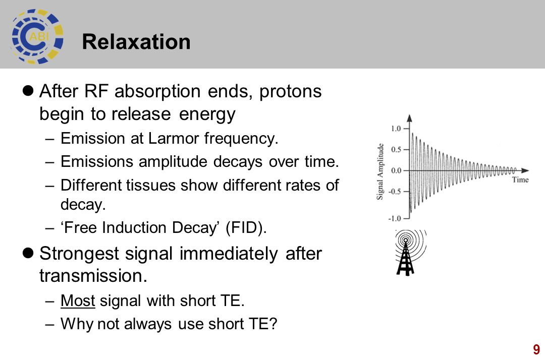 Relaxation After RF absorption ends, protons begin to release energy