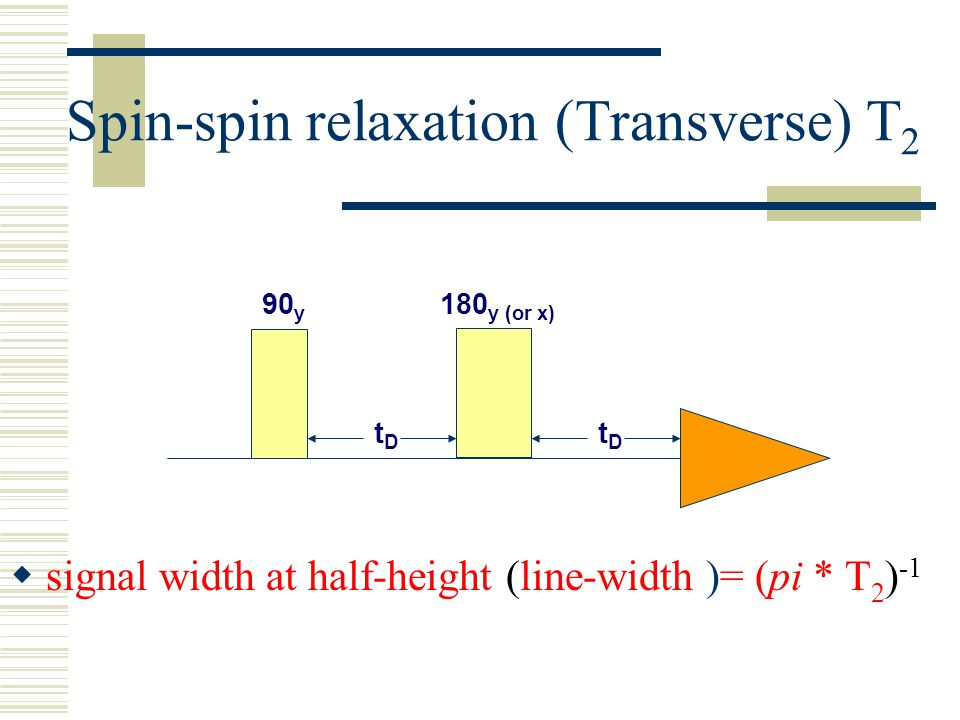Spin-spin relaxation (Transverse) T2