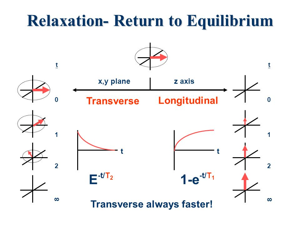 Relaxation- Return to Equilibrium