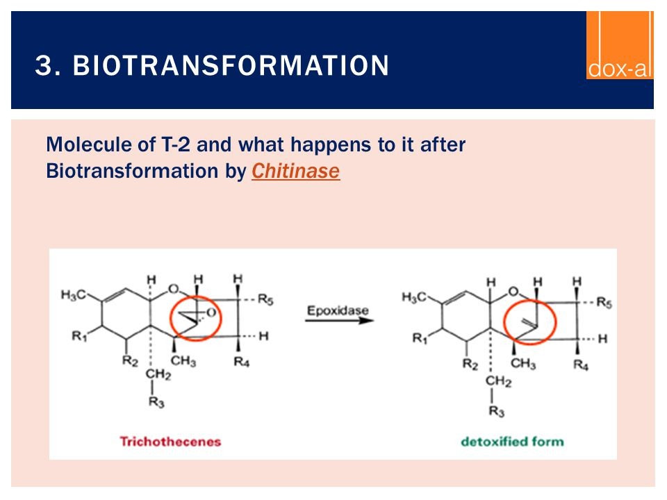 3. Biotransformation Molecule of T-2 and what happens to it after Biotransformation by Chitinase