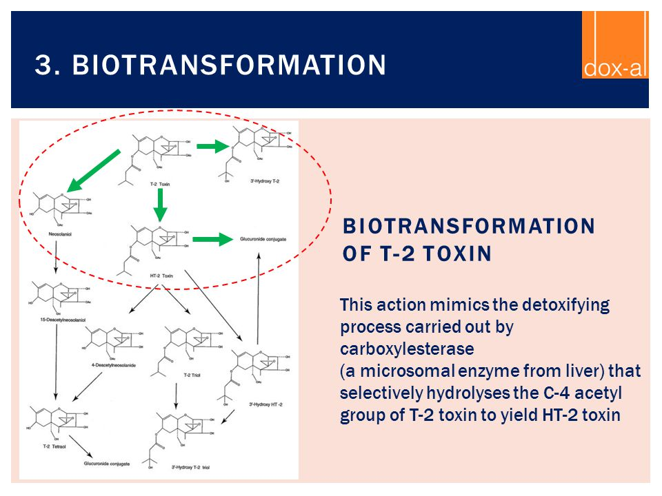 Biotransformation of T-2 toxin