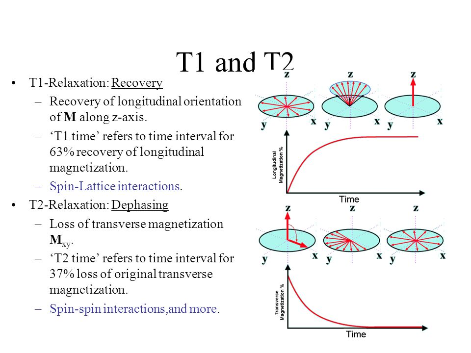 T1 and T2 T1-Relaxation: Recovery