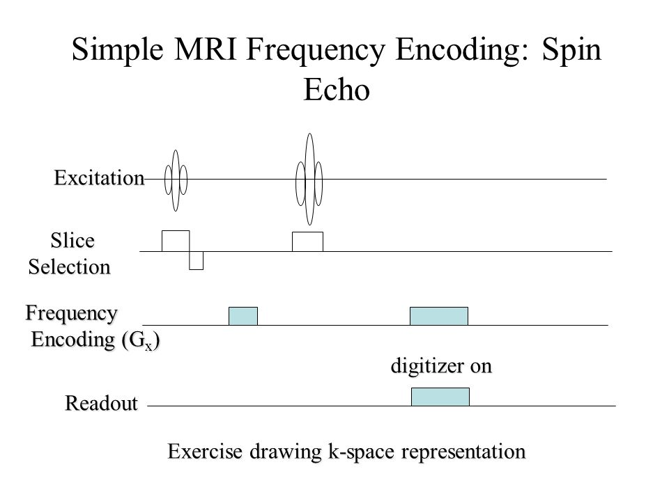 Simple MRI Frequency Encoding: Spin Echo
