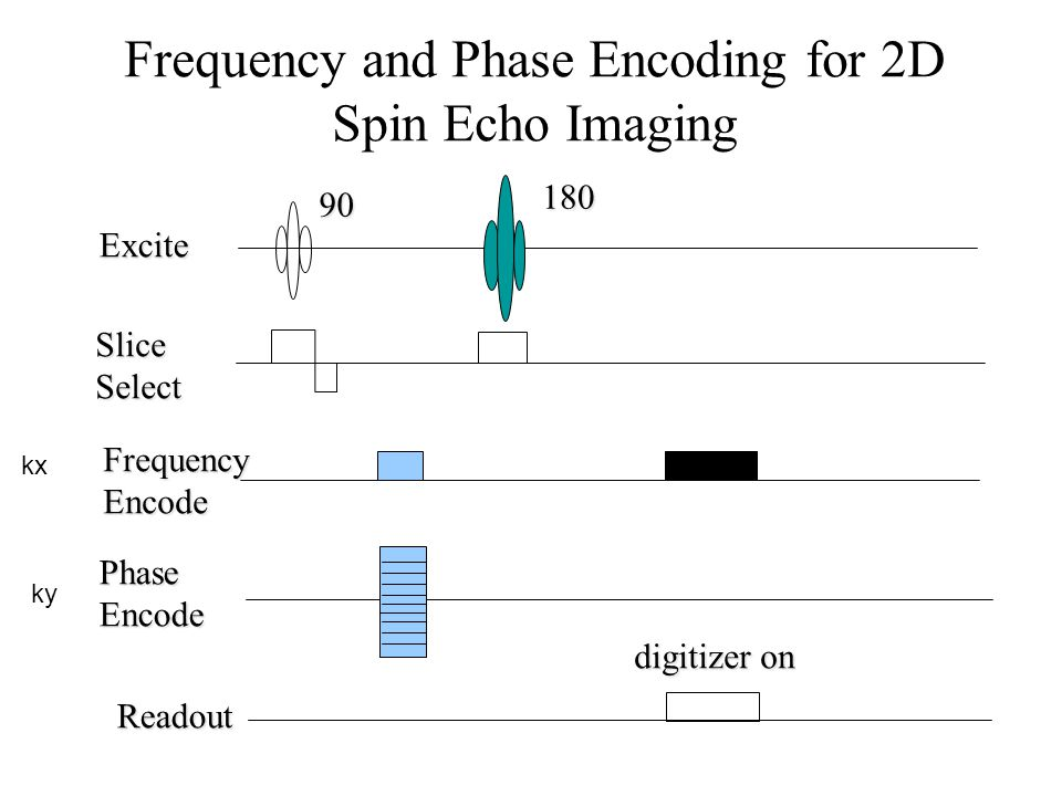 Frequency and Phase Encoding for 2D Spin Echo Imaging
