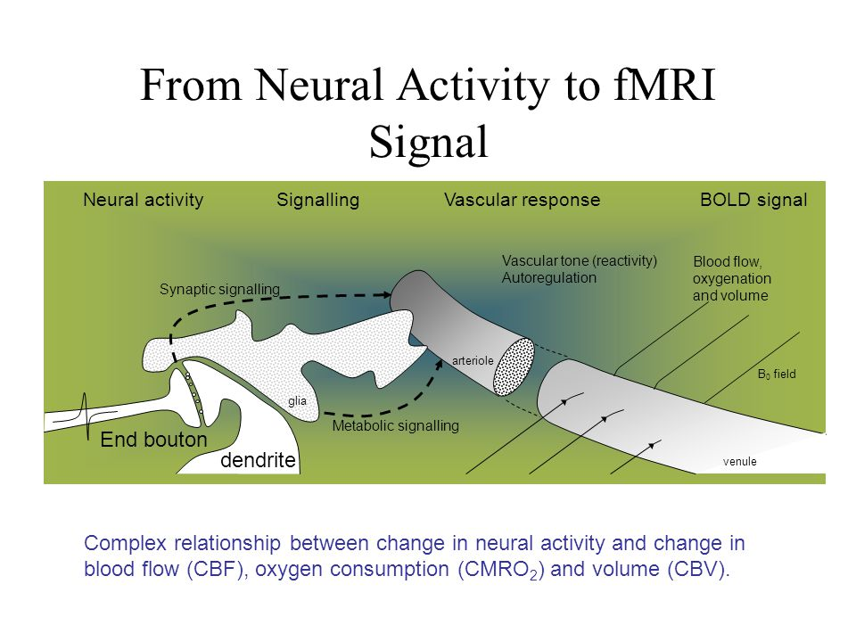 From Neural Activity to fMRI Signal