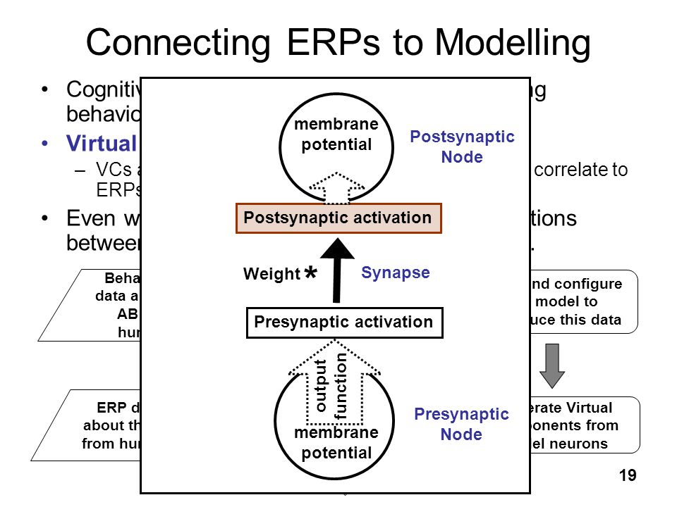 Connecting ERPs to Modelling