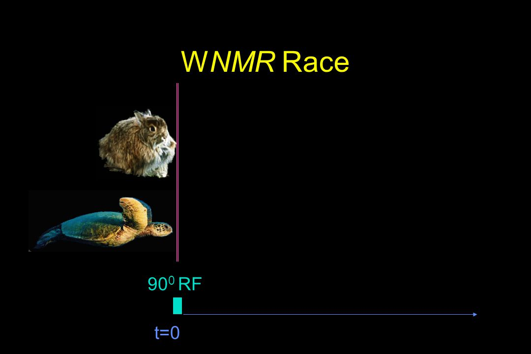 WNMR Race 900 RF t=0