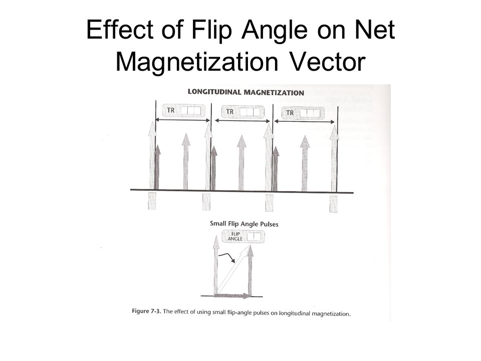 Effect of Flip Angle on Net Magnetization Vector