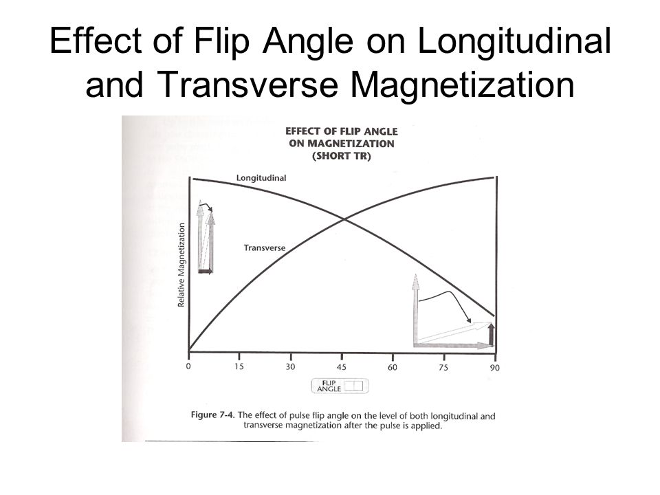 Effect of Flip Angle on Longitudinal and Transverse Magnetization