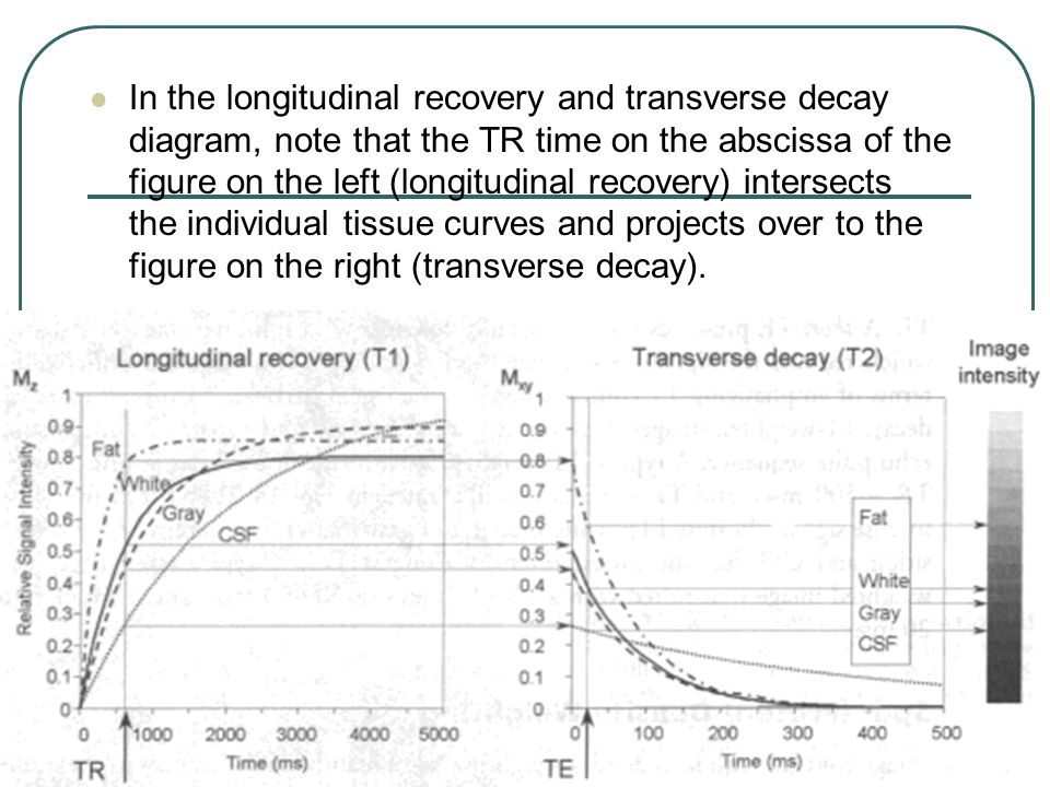 In the longitudinal recovery and transverse decay diagram, note that the TR time on the abscissa of the figure on the left (longitudinal recovery) intersects the individual tissue curves and projects over to the figure on the right (transverse decay).