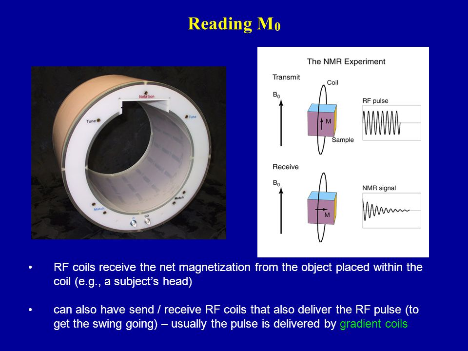 Reading M0 RF coils receive the net magnetization from the object placed within the coil (e.g., a subject's head)