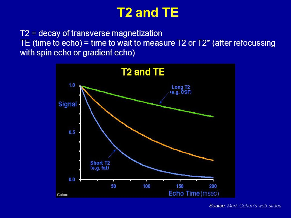 T2 and TE T2 = decay of transverse magnetization